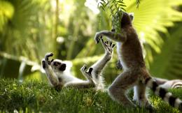 Monkey Pictures HD Wallpaper | Free Desk Wallpapers 929