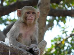 Monkey HD Wallpapers | Monkey Pictures Free | Cool Wallpapers 956