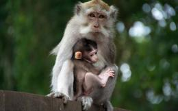Monkey HD Wallpapers | Monkey Pictures Free | Cool Wallpapers 1700