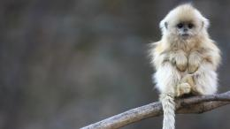Beautiful Wallpapers: monkey hd wallpapers 1600