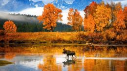 Canadian autumn lake trees moose orange 313
