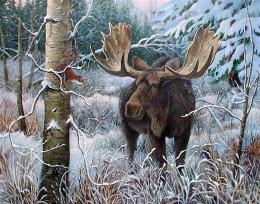 Moose in early winter firs frost trees snow HD Wallpaper 207