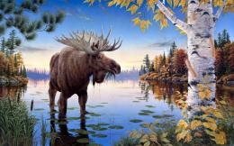 Moose HD Wallpapers 336
