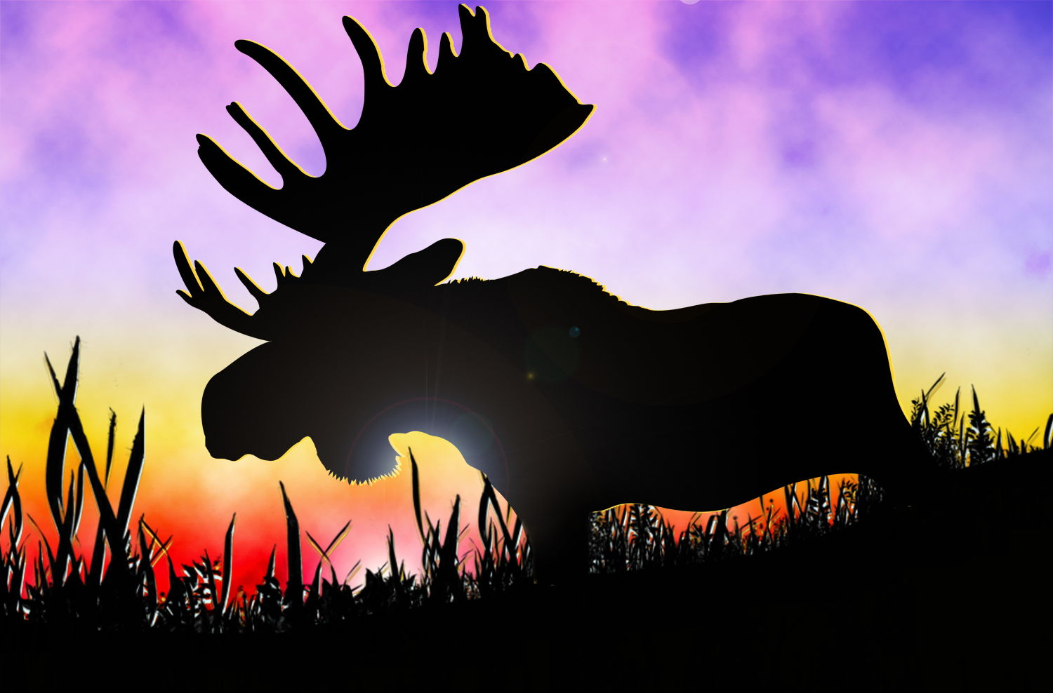 Moose HD Wallpapers | Moose Desktop Pictures | Cool Wallpapers 889