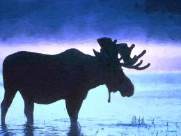 Standing moose nice nature blue sky bull HD Wallpaper 241