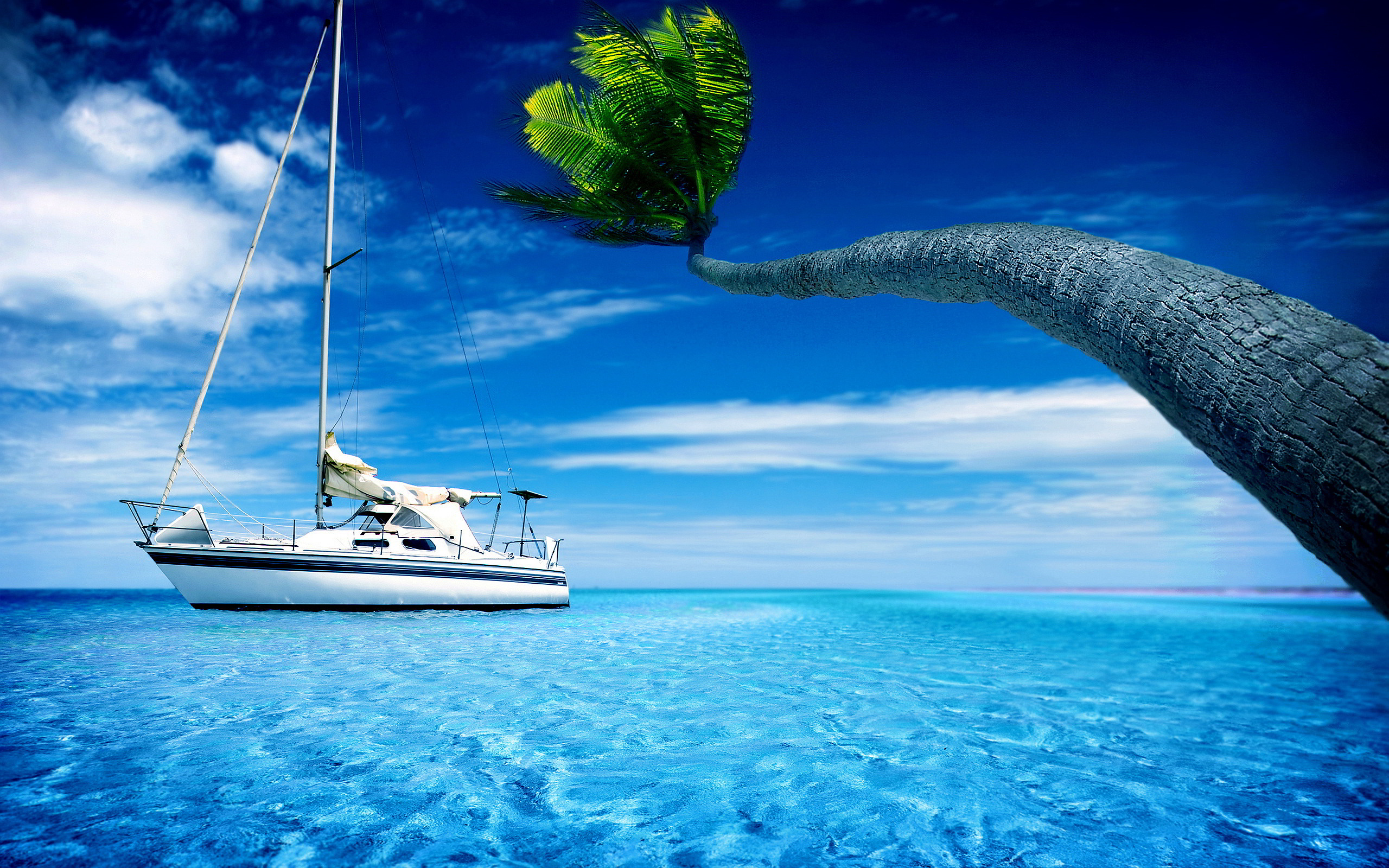 21 Sailing Palm Ocean Wallpapers Pictures Photos Images