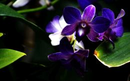 Purple Orchid Flower Photography wallpapers 807