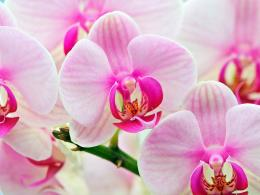 Flowers orchid 118