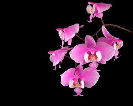 orchids flowers wallpaper orchids flowers wallpaper orchids flowers 1262