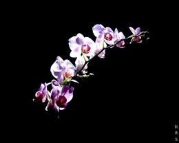 Nice Purple Orchid Flower HD wallpapersNice Purple Orchid Flower 1725