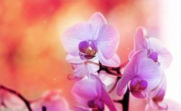 Home » Flowers Wallpapers » Orchid Flower Wallpapers 893