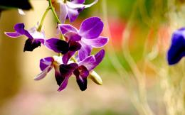 purple orchid flower image of orchid flower green orchid flower orchid 424