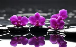 Home Browse All Purple Water Lillies 1420