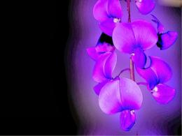 Blue Orchid Flower Wallpaper 217
