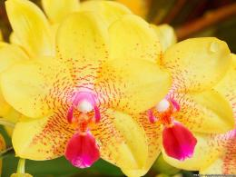 yellow orchid flower meaning blue orchids flowers yellow flowers 288
