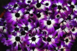 Hata3\'s Photo Haiku: Purple flowers 1037