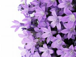 Flowers Purple FlowerFree high quality background pictures 1669