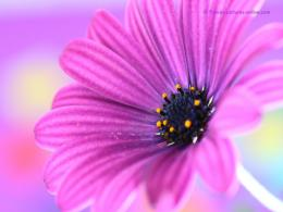Purple Flower Wallpaper 3 933