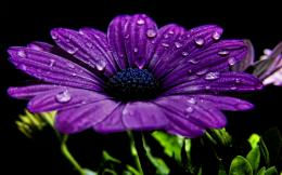 Flower wallpapers Beautiful Purple Flower wallpaper 616