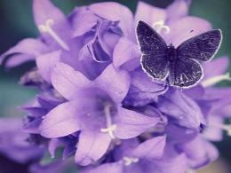 HomeNatureFlowers & PlantsPurple Flower Wallpapers 1552