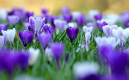 Purple Flowers Wallpaper | Purple Flowers Pictures | Cool Wallpapers 1917
