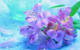 Purple Flower Wallpapers Pictures Photos Images 682