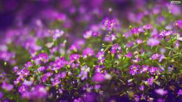 wallpapers flower flowers purple wallpaper 1920x1080 767