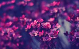 Little purple flowers Wallpapers Pictures Photos Images 1481