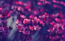 Violet Purple Flowers Wallpaper 111