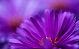 Purple Flower wallpaper702231 1209