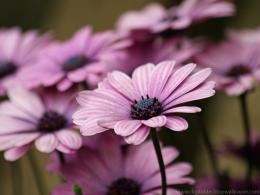 Purple Flower Wallapaper 765