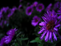 1024x768 Purple flowers desktop PC and Mac wallpaper 867
