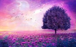 Purple Flowers Field Art Tree HD Wallpaper 900