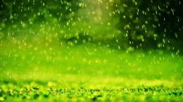 Green rain free download desktop wallpaper 1771