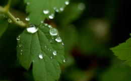 1920x1200 Leaf after summer rain desktop PC and Mac wallpaper 1967