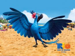 New Girl Bird Rio 2 Movie Wallpaper HD for Desktop Background | Iphone 174