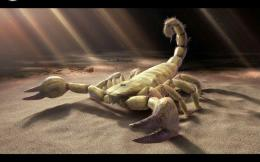 Black Scorpion HD Wallpapers 1335