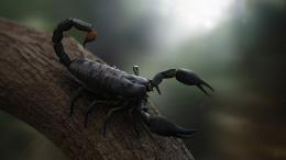 Scorpion HD Wallpapers | Scorpion Images Pictures | Cool Wallpapers 912