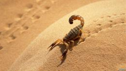 Scorpion 1600×900 Wallpaper 688