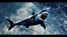 Shark Wallpaper HD by Tooyp on DeviantArt 1763