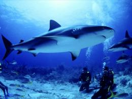 Shark High Quality Wallpaper CollectionThe Today Stuff 501