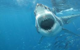White Shark HD Wallpapers 1016