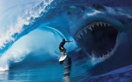 Shark Attack Surfer Viehd HD Wallpaper 845