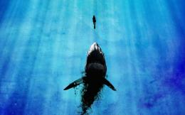 Shark hd wallpapers | Movies Songs Lyrics 1737