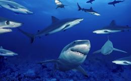 Animal pictures sharks wallpapers hd photos shark wallpaper 13 jpg 1915