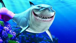 Shark HD Wallpapers 455