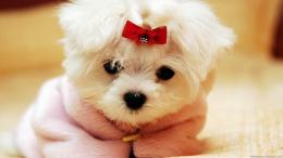 cute little dogs wallpaper cute little dogs download this wallpaper 1582