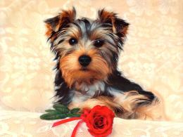 Dogs wallpapers, dog wallpaper , dog wallpapers, dogs wallpaper, dogs 1484