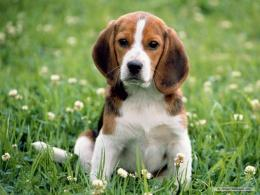 WALLPAPERS WORLD : Dogs wallpaper 795
