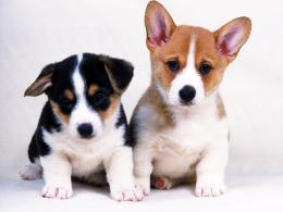 Dogs Photo Together Dog Wallpapers Backgrounds on this Dogs Wallpapers 1413